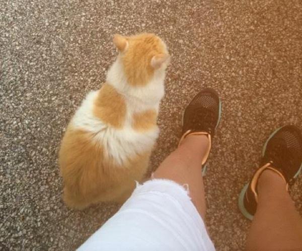 近くに来た猫