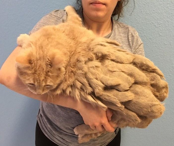 毛がいっぱいの猫