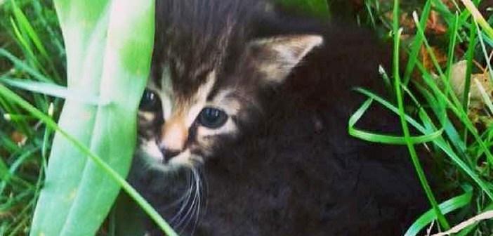 草の陰に隠れていた子猫