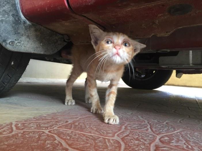 車の下の子猫