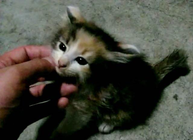 少し仲良くなった子猫
