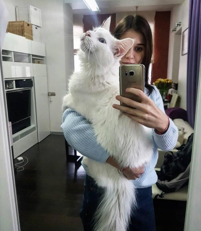 写真撮影猫