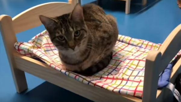 IKEAのベッドで丸くなる猫