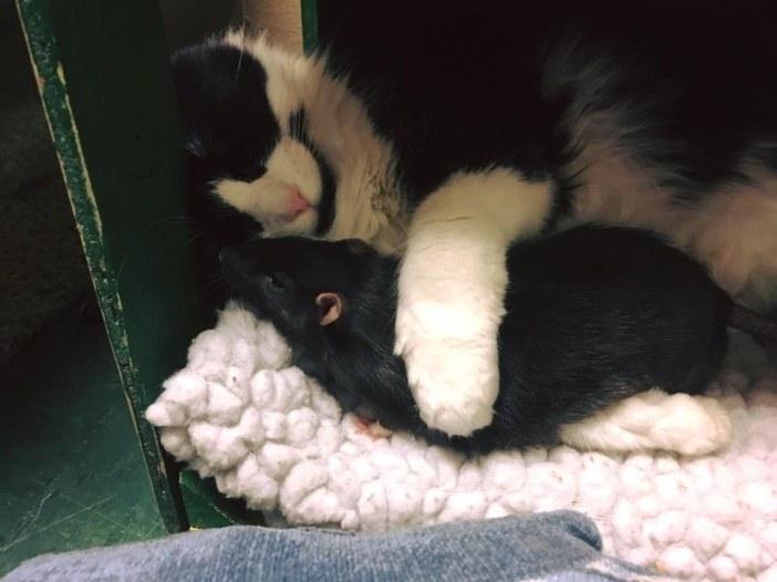 ネズミをギュッとする猫