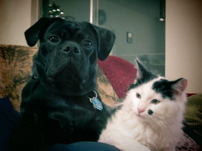 いい表情の犬と猫