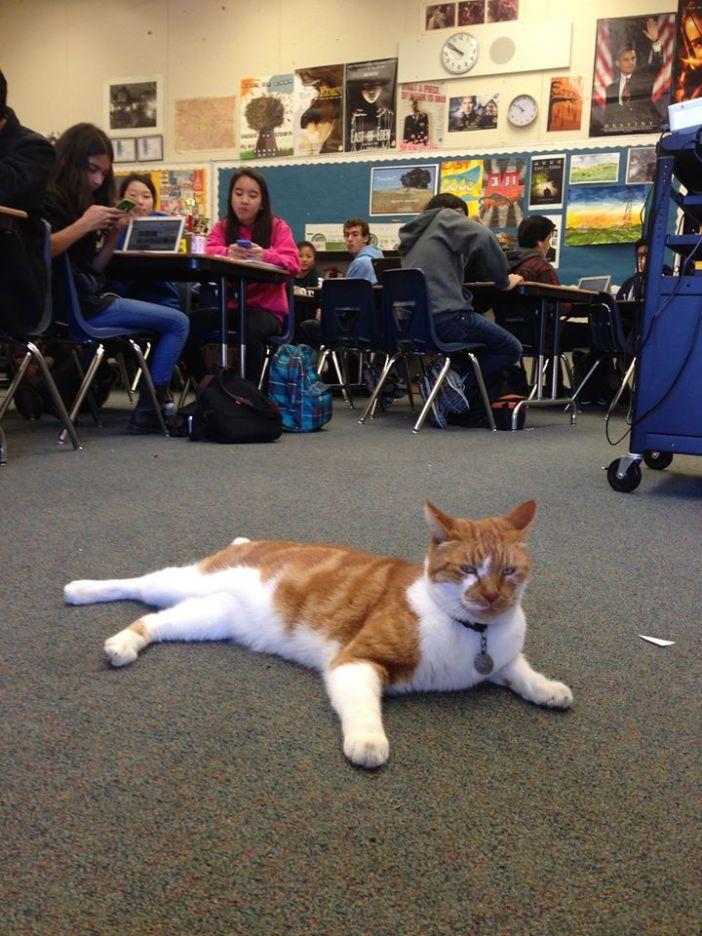 教室でまったりする猫