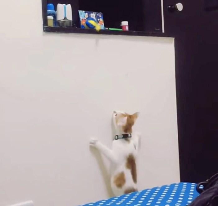 オモチャが取りたい猫