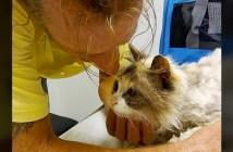 最愛の猫と再会した男性