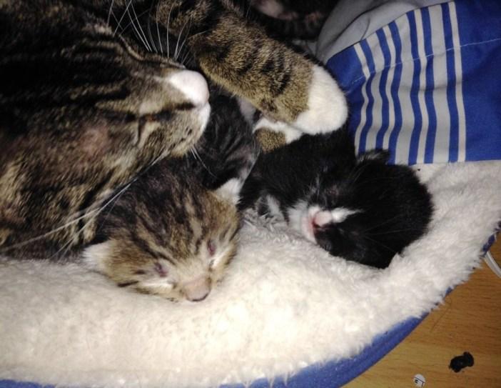幸せそうな子猫と母猫