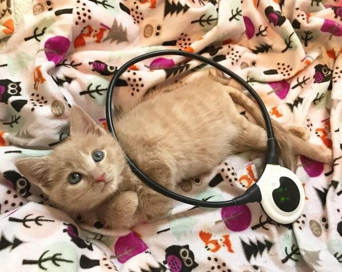 治療中の子猫