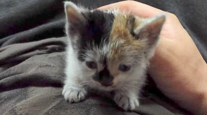 ヨチヨチ子猫