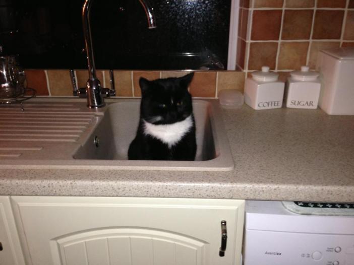 キッチン猫