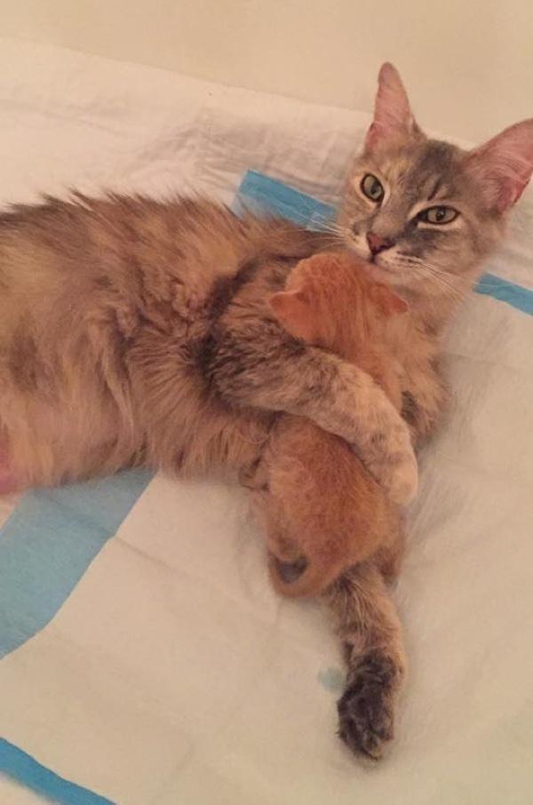 子猫を抱く猫
