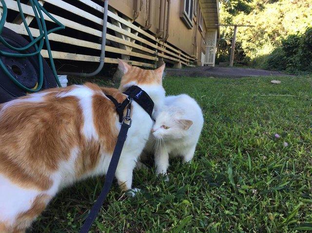 猫の出会い