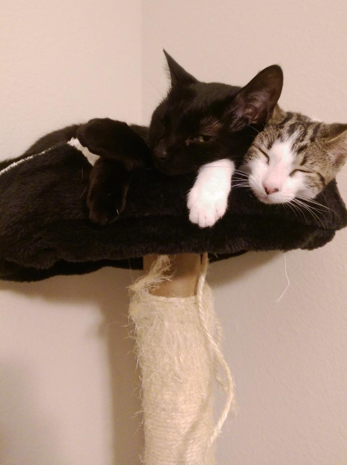 一緒に眠る猫と子猫