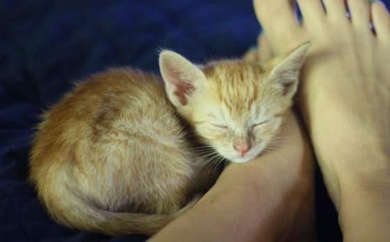 足の枕で眠る子猫