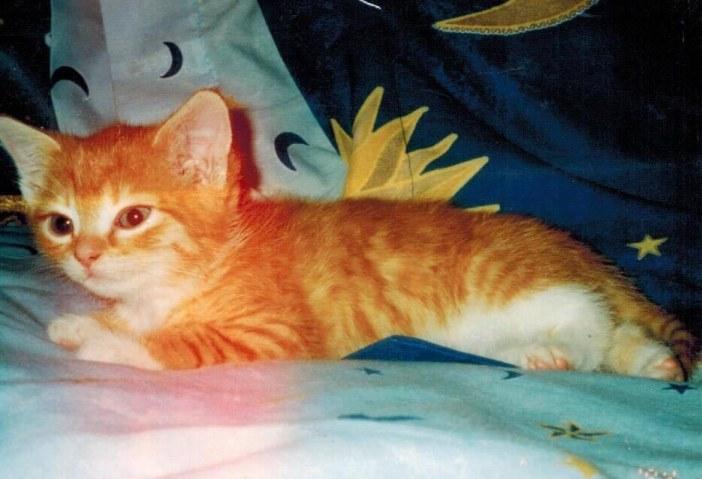 幼い頃の猫