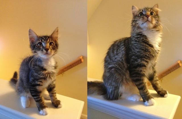 成長した猫