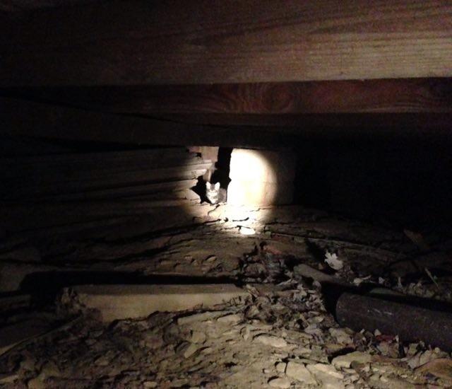 家の下の子猫