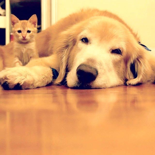 まったりする犬と子猫