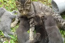 野良猫親子
