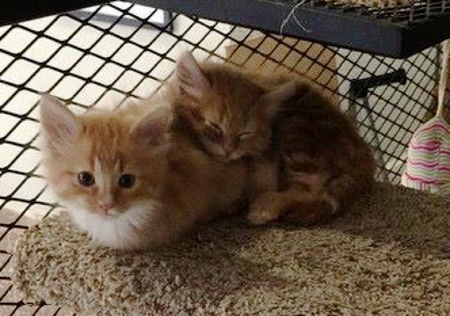 くっつく2匹の子猫