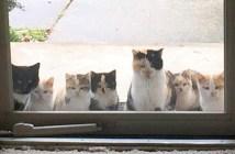 ポーチに来た猫