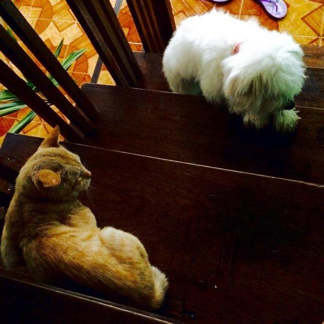 犬と一緒の猫