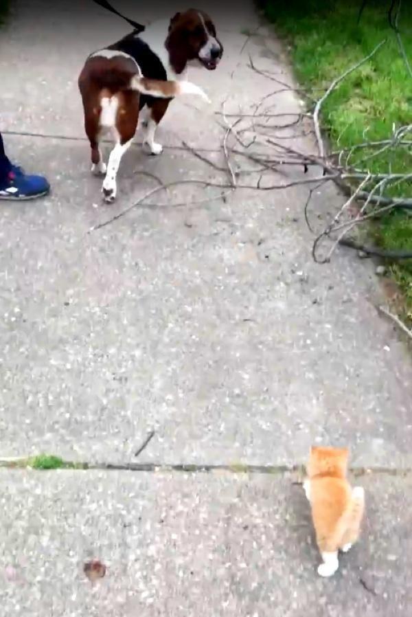犬の後をついてくる子猫