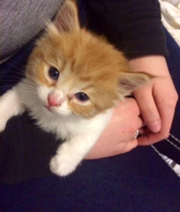 抱っこされる子猫