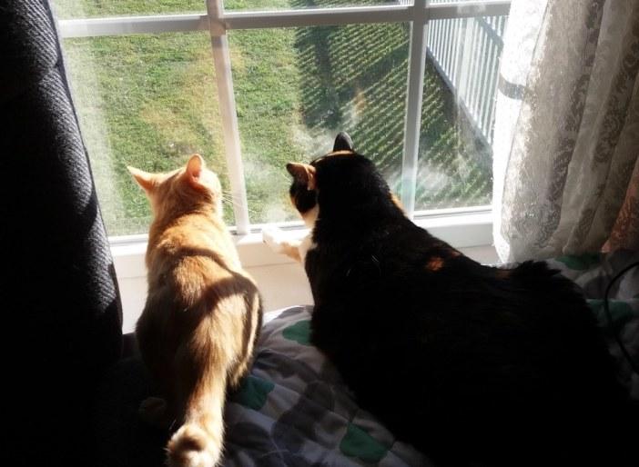一緒に外を眺める猫