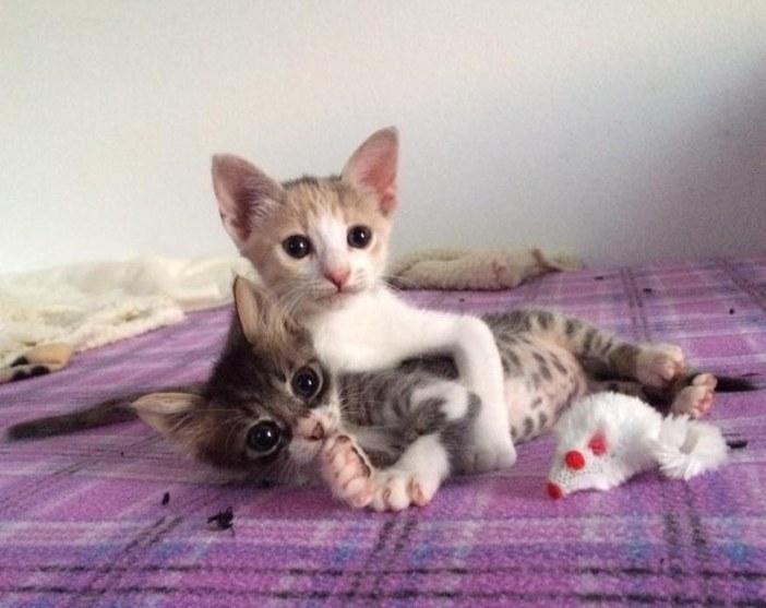 一緒の子猫