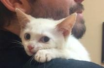 抱きつく子猫