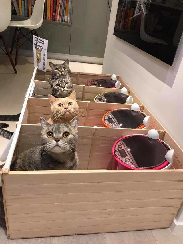 個室でご飯を食べる猫