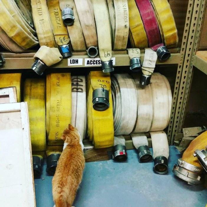 消防署の猫