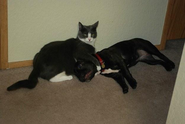 首を締める猫