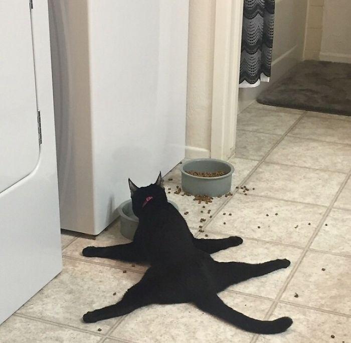 平べったい猫