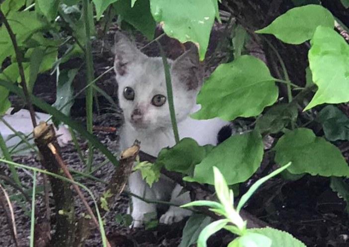 葉っぱの裏の子猫