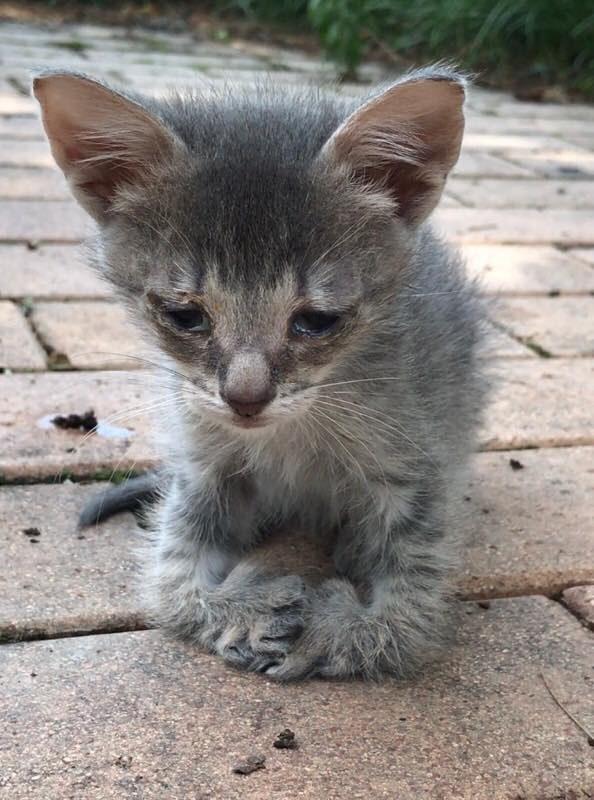 足に障がいを持つ子猫