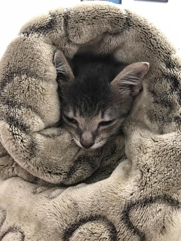 温かそうな子猫