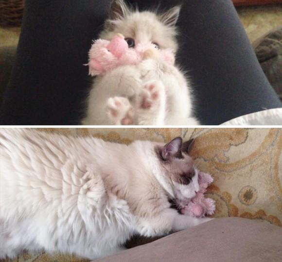 オモチャをぎゅっとする子猫