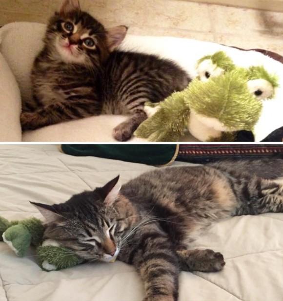 カエルのぬいぐるみと猫