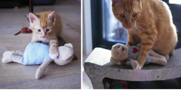 ぬいぐるみと猫は友達