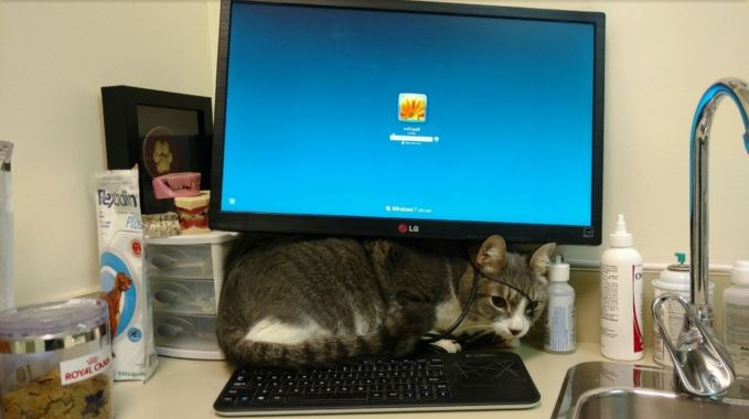 パソコンの下に隠れる