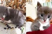 裏庭で保護された子猫