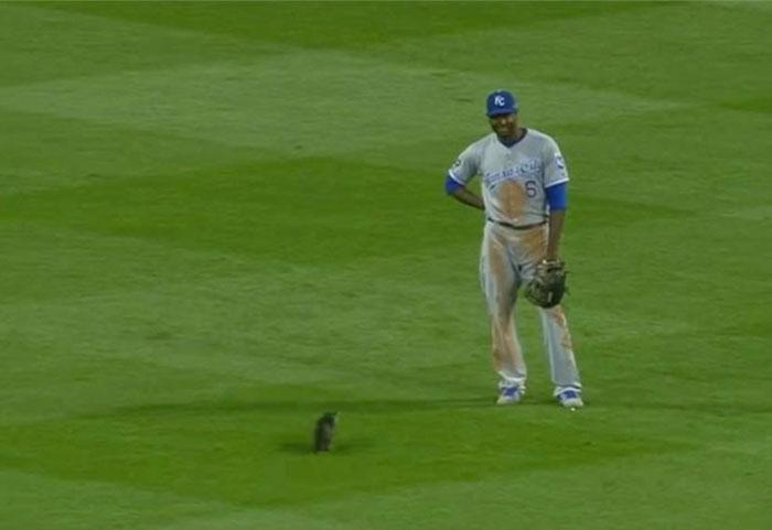 見つめる猫と選手