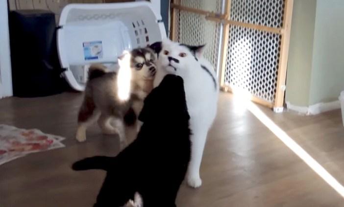 囲まれる猫