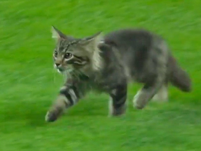 球場に現れた子猫