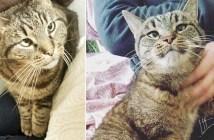 保護施設で出会った猫