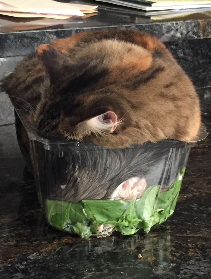 野菜の上で眠る猫